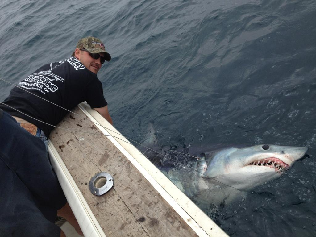 ловля акулы картинки вальсовый бой